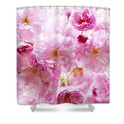 Pink cherry blossoms  Shower Curtain by Elena Elisseeva