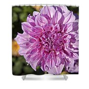 Pink Dahlia Shower Curtain by Peter French