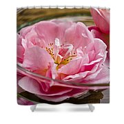 Pink Roses Shower Curtain by Frank Tschakert