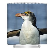 Royal Penguin Macquarie Isl Antarctica Shower Curtain by Konrad Wothe