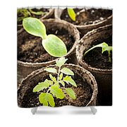 Seedlings growing in peat moss pots Shower Curtain by Elena Elisseeva