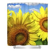 Sunflowers Shower Curtain by Elena Elisseeva