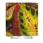 Turning Leaves Shower Curtain by Stephen Anderson