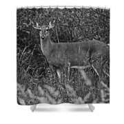 Well Hello There Shower Curtain by Frozen in Time Fine Art Photography