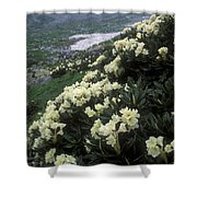 Wild Rhododendrons On A Hillside Shower Curtain by Anonymous
