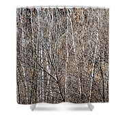 Winter Forest Shower Curtain by Elena Elisseeva