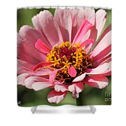 Zinnia from the Whirlygig Mix Shower Curtain by J McCombie