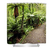 Forest Trail Shower Curtain by Les Cunliffe