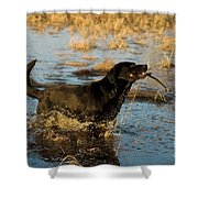 Black Labrador Retriever Shower Curtain by Linda Freshwaters Arndt