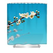 Almond Branch Shower Curtain by Carlos Caetano