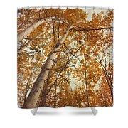autumn aspens Shower Curtain by Priska Wettstein