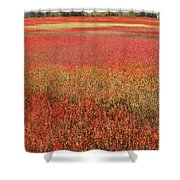 Autumn Blueberry Field Maine Shower Curtain by Scott Leslie