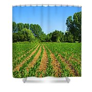 cultivated land Shower Curtain by Carlos Caetano