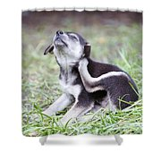 Cute Puppies Shower Curtain by Jannis Werner