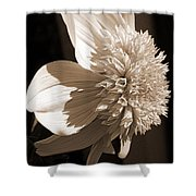 Dahlia Named Platinum Blonde Shower Curtain by J McCombie