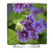 Geranium Himalayense Shower Curtain by Frank Tschakert