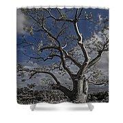 Ghost Tree Shower Curtain by Debra and Dave Vanderlaan