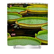 Lilly Pads Shower Curtain by Frozen in Time Fine Art Photography