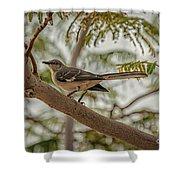 Mockingbird Shower Curtain by Robert Bales
