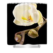 Orchid Shower Curtain by Ilze Lucero