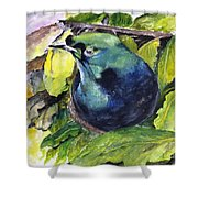 Paradise Bird Shower Curtain by Jason Sentuf
