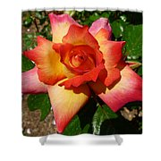Rainbow Sorbet Rose Shower Curtain by Denise Mazzocco