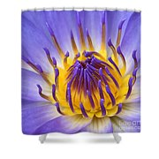 The Lotus Flower Shower Curtain by Sharon Mau