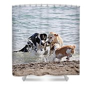 Three dogs playing on beach Shower Curtain by Elena Elisseeva