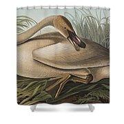 Trumpeter Swan Shower Curtain by John James Audubon