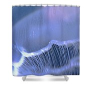 Underwater View Of A Moon Jellyfish Shower Curtain by Thomas Kline