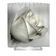White Rose Shower Curtain by Sandy Keeton