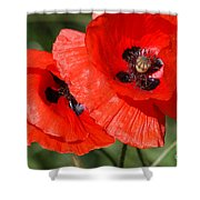 Beautiful Poppies 2 Shower Curtain by Carol Lynch