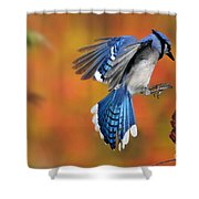 Blue Jay Shower Curtain by Scott Linstead