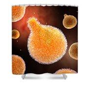 Conceptual Image Of Plasmodium Causing Shower Curtain by Stocktrek Images