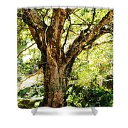 Kingdom Of The Trees. Peradeniya Botanical Garden. Sri Lanka Shower Curtain by Jenny Rainbow