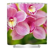 Orchids Shower Curtain by Carlos Caetano