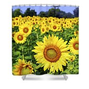 Sunflower field Shower Curtain by Elena Elisseeva