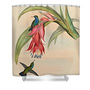 Hummingbirds Shower Curtain by Philip Ralley