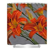 Day Lilly Shower Curtain by William Norton