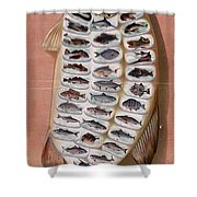 50 Fish From American Waters Shower Curtain by Nomad Art And  Design
