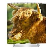 Highland Cow Shower Curtain by Brian Jannsen