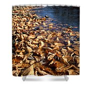 Ussurian Taiga Autumn Shower Curtain by Anonymous