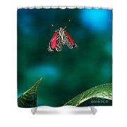 89 Butterfly In Flight Shower Curtain by Stephen Dalton