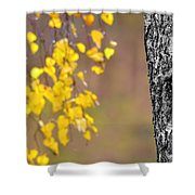 A Birch At The Lake Shower Curtain by Toppart Sweden