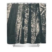 A Breath Of Fresh Air Shower Curtain by Laurie Search