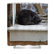 A Circled Up Cat  Shower Curtain by Lainie Wrightson