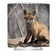 A Cute Kit Fox Portrait 1 Shower Curtain by Thomas Young