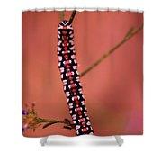 A Little Caterpillar Shower Curtain by Jeff Swan