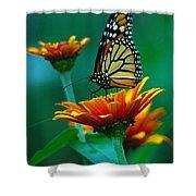 A Monarch II Shower Curtain by Raymond Salani III