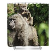 A Monkey And Its Baby Sitting On Her Shower Curtain by Diane Levit
